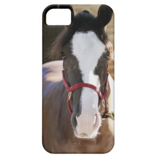 Close-up of a horse tied in a stable iPhone SE/5/5s case