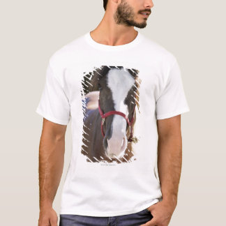 Close-up of a horse tied in a stable T-Shirt