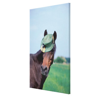 Close-up of a horse wearing a green hat canvas print