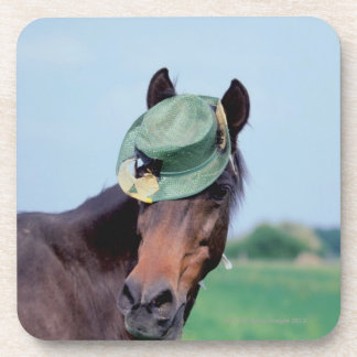Close-up of a horse wearing a green hat coasters
