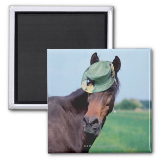 Close-up of a horse wearing a green hat magnet