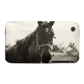 close up of a horse with sepia tone applied iPhone 3 cases