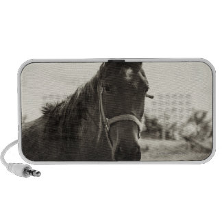 close up of a horse with sepia tone applied iPod speaker