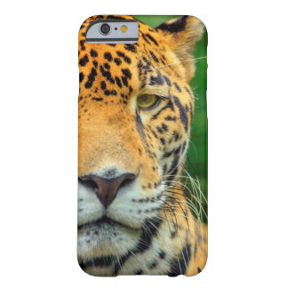 Close-up of a jaguar face, Belize Barely There iPhone 6 Case