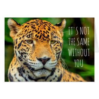 Close-up of a jaguar face, Belize Card