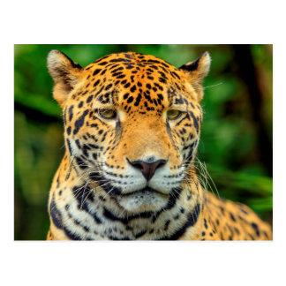 Close-up of a jaguar face, Belize Postcard