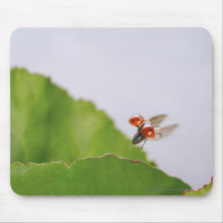 Close-up of a ladybug flying over a leaf mouse pad