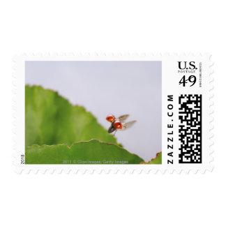 Close-up of a ladybug flying over a leaf postage stamps