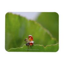 Close-up of a ladybug on a leaf magnet