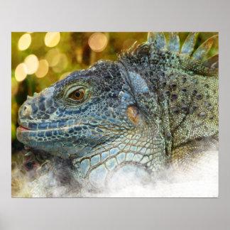 Close Up of a Large Scalygreen  Iguana Lizard Poster