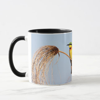 Close-up of a little bee-eater bird mug