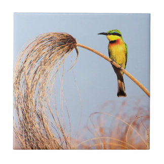 Close-up of a little bee-eater bird small square tile