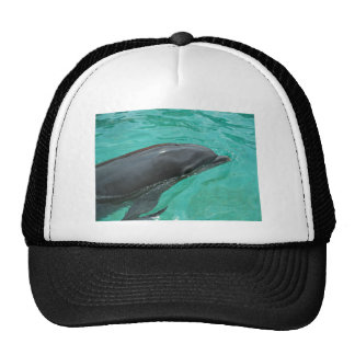 Close up of a majestic dolphin. trucker hat