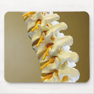 Close-up of a medical model of vertebrae of the mouse pad