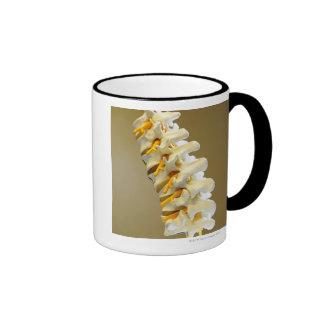 Close-up of a medical model of vertebrae of the ringer coffee mug