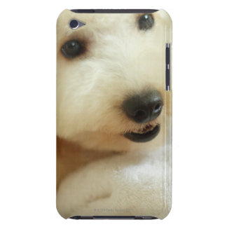 Close-up of a miniature poodle 2 iPod Case-Mate cases