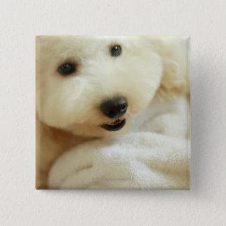 Close-up of a miniature poodle 2 pinback button
