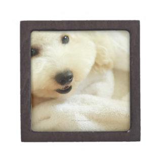 Close-up of a miniature poodle 2 premium gift box