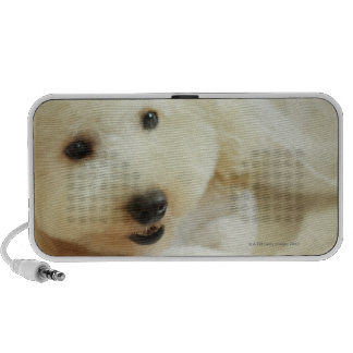 Close-up of a miniature poodle 2 iPhone speakers