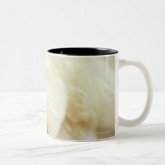 Close-up of a miniature poodle 2 Two-Tone coffee mug