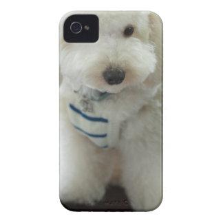 Close-up of a miniature poodle Case-Mate iPhone 4 case