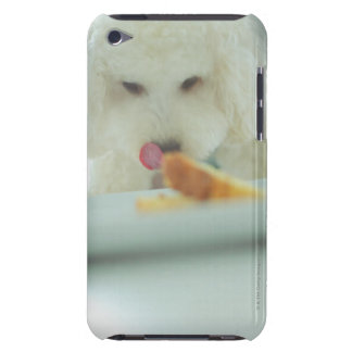 Close-up of a miniature poodle eating food iPod touch Case-Mate case