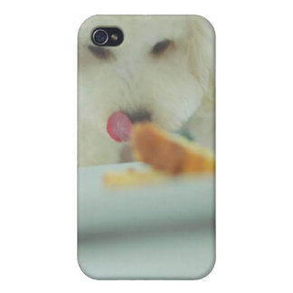 Close-up of a miniature poodle eating food cover for iPhone 4
