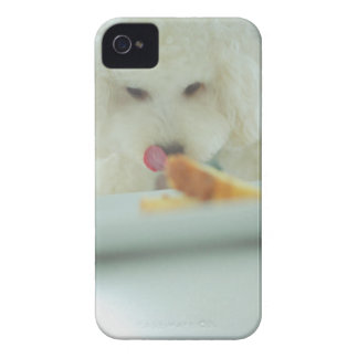 Close-up of a miniature poodle eating food iPhone 4 cover