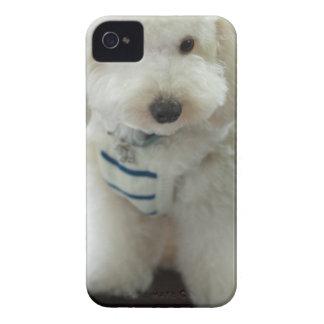 Close-up of a miniature poodle iPhone 4 Case-Mate case