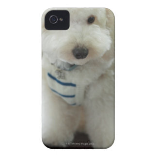 Close-up of a miniature poodle iPhone 4 cover