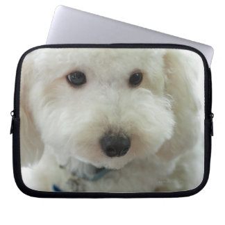 Close-up of a miniature poodle computer sleeve