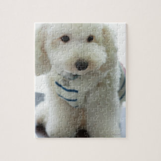 Close-up of a miniature poodle jigsaw puzzle