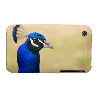 Close-up of a peacock 2 iPhone 3 Case-Mate cases