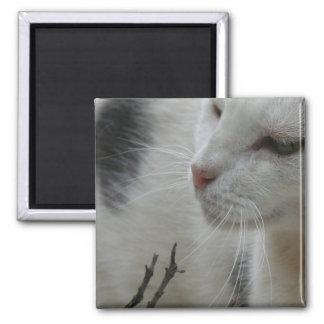 Close Up Of A Piebald Cat Fridge Magnets