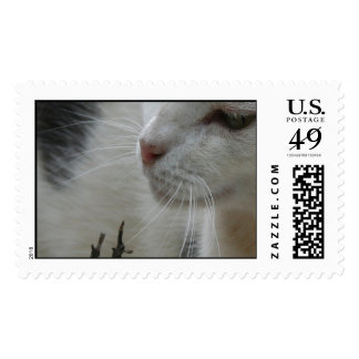 Close Up Of A Piebald Cat Stamps