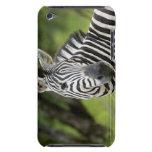 Close-up of a Plains zebra (Equus burchellii) in iPod Touch Cases