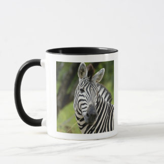 Close-up of a Plains zebra (Equus burchellii) in Mug