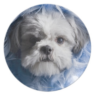Close-up of a puppy covered with feathers plate