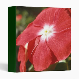 Close Up Of A Red Busy Lizzie Flower 3 Ring Binder