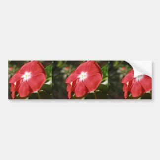 Close Up Of A Red Busy Lizzie Flower Bumper Sticker