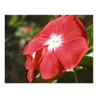 Close Up Of A Red Busy Lizzie Flower 4.25x5.5 Paper Invitation Card