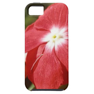 Close Up Of A Red Busy Lizzie Flower iPhone SE/5/5s Case