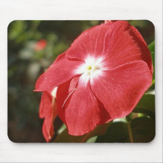 Close Up Of A Red Busy Lizzie Flower Mouse Pad