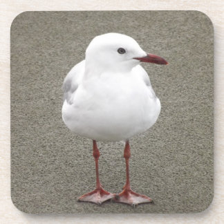 Close Up of a Seagull Beverage Coaster