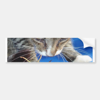 Close Up of A Tabby Cat and Katydid Bumper Sticker