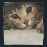 """Close up of a tabby cats eyes bandana<br><div class=""""desc"""">face&#160;, cat&#160;, baby&#160;, cats&#160;, funny&#160;, animal&#160;, cute&#160;, puppy&#160;, eyes&#160;, pet&#160;, kittens&#160;, eye&#160;, kitty&#160;, little&#160;, lovely&#160;, kitten&#160;, &quot;cat breeds&quot;&#160;, &quot;cute pictures&quot;&#160;, &quot;close up&#160;&quot;, looking&#160;, adorable&#160;, &quot;cat pictures&quot;&#160;, &quot;cute cat&quot;&#160;, &quot;the eye&#160;&quot;, feline&#160;, lovable&#160;, whiskers&#160;, tabby&#160;, &quot;cat picture&quot;&#160;, &quot;funny kittens&quot;&#160;, &quot;baby kitten&quot;&#160;, &quot;pet cat&quot;&#160;, &quot;cat cute&quot;&#160;, &quot;cats and kittens&quot;&#160;, &quot;funny kitten&quot;&#160;, &quot;cute little...</div>"""