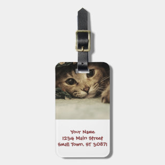 Close up of a tabby cats eyes luggage tag