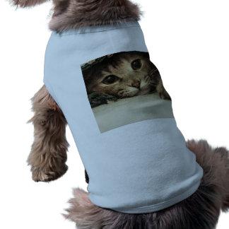 Close up of a tabby cats eyes shirt