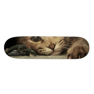Close up of a tabby cats eyes skateboard