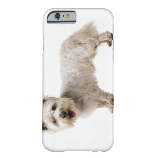 Close up of a terrier barely there iPhone 6 case